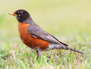 Climate letters: Listen to the birds!