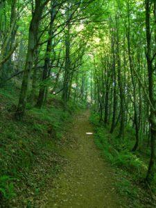Building Nature inclusive lifestyle